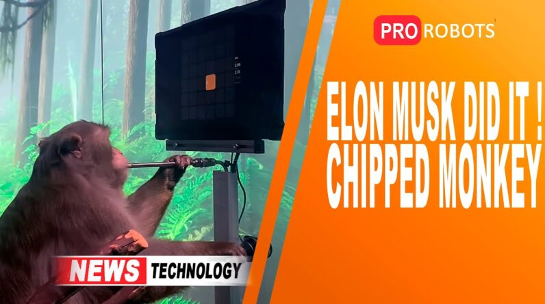 Elon Musk's Chipped Monkey | High Tech News